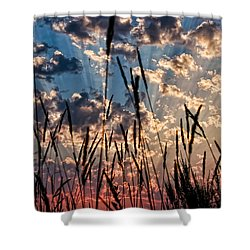 Shower Curtain featuring the photograph Sunset Through The Grasses by Don Schwartz