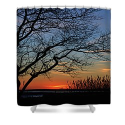 Sunset Tree In Ocean City Md Shower Curtain
