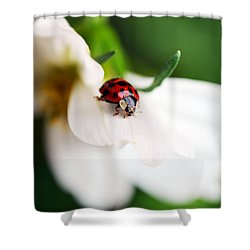 Sunshine And Petal Rest Shower Curtain