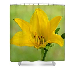Sunshine In A Flower Shower Curtain by Kim Pate