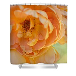Shower Curtain featuring the photograph Sunshine by Julie Andel
