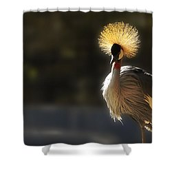 Sunshine On My Shoulders Shower Curtain by Music of the Heart