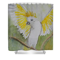 Suphar Crested Cockatoo Shower Curtain by Pamela  Meredith