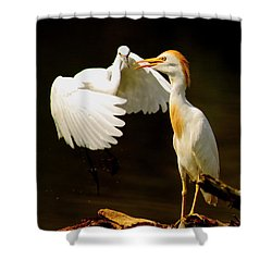 Suprised Cattle Egret Shower Curtain by Robert Frederick