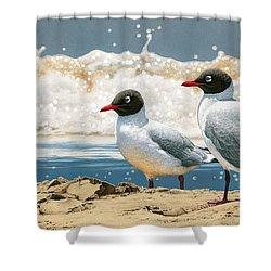 Surf 'n' Turf - Franklin's Gulls Shower Curtain