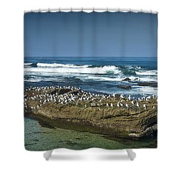Surf Waves At La Jolla California With Gulls Perched On A Large Rock No. 0194 Shower Curtain by Randall Nyhof