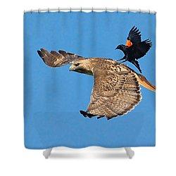 Surfer Bird  Shower Curtain