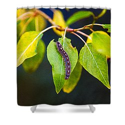 Surprise Beauty Shower Curtain by Omaste Witkowski