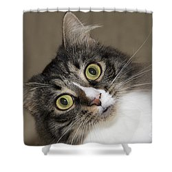 Surprise Shower Curtain by Jeannette Hunt