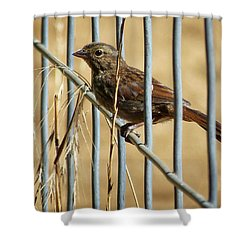 Surprise Visit Shower Curtain