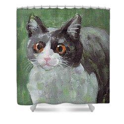 Surprised Cat Shower Curtain