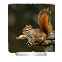 Surprised Red Squirrel With Nut Portrait Shower Curtain by Debbie Oppermann
