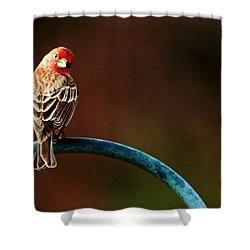 Surreal Purple Finch Shower Curtain