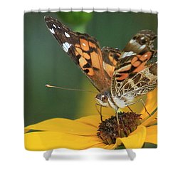 Susan Painted Lady Shower Curtain by Reid Callaway