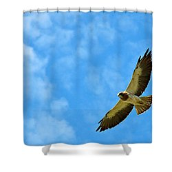 Swainson's Hawk Snake River Birds Of Prey Natural Conservation Area Shower Curtain by Ed  Riche