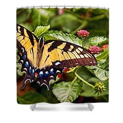 Swallowtail Beauty Shower Curtain