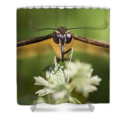 Swallowtail Butterfly Shower Curtain by Adam Romanowicz