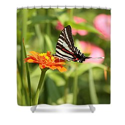 Swallowtail Butterfly Shower Curtain by Kim Hojnacki