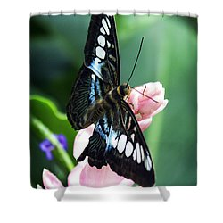 Swallowtail Butterfly Shower Curtain by Marilyn Hunt
