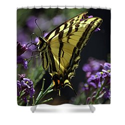 Swallowtail Butterfly On Lavender  Shower Curtain