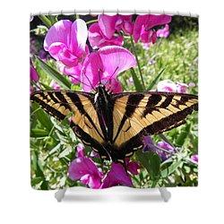Swallowtail Shower Curtain