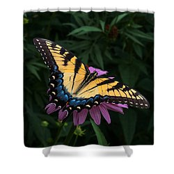 Swallowtail  Shower Curtain by Don Spenner