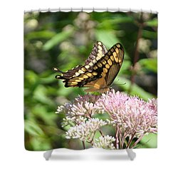 Shower Curtain featuring the photograph Swallowtail by Karen Silvestri
