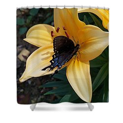 Shower Curtain featuring the photograph Swallowtail On Asiatic Lily by Kathryn Meyer