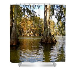 Swamp - Cypress Trees Shower Curtain