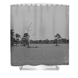 Shower Curtain featuring the photograph Swamp Cypress Trees Black And White by Joseph Baril
