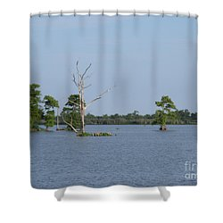 Shower Curtain featuring the photograph Swamp Cypress Trees by Joseph Baril