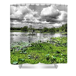 Swamp Shower Curtain by Dan Sproul