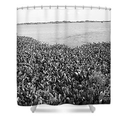 Shower Curtain featuring the photograph Swamp Hyacinths Water Lillies Black And White by Joseph Baril