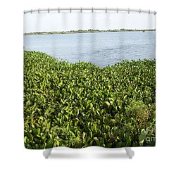 Shower Curtain featuring the photograph Swamp Hyacinths Water Lillies by Joseph Baril