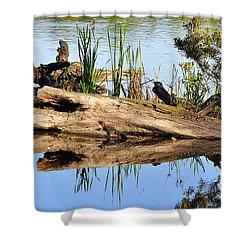 Swamp Scene Shower Curtain by Al Powell Photography USA