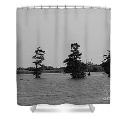 Shower Curtain featuring the photograph Swamp Tall Cypress Trees Black And White by Joseph Baril