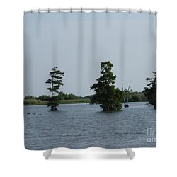 Shower Curtain featuring the photograph Swamp Tall Cypress Trees  by Joseph Baril