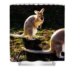 Red-necked Wallabies Shower Curtain