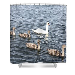 Swan And His Ducklings Shower Curtain by John Telfer
