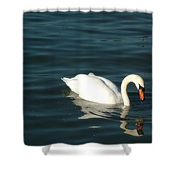 Shower Curtain featuring the photograph Swan Elegance by Kathy Churchman