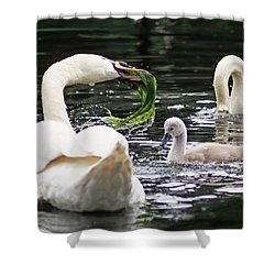Swan Family Meal Shower Curtain