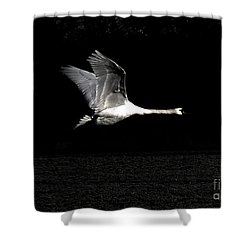 Swan In The Night Shower Curtain