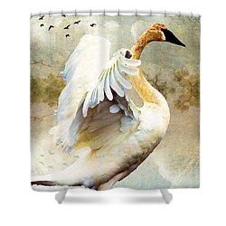 Swan Sense Shower Curtain