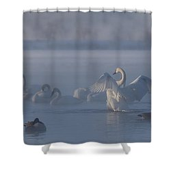 Shower Curtain featuring the photograph Swan Showing Off by Patti Deters