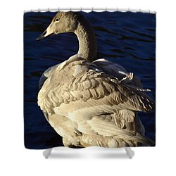 Swan Sits And Looks Out Over The Lake Shower Curtain by Tommytechno Sweden