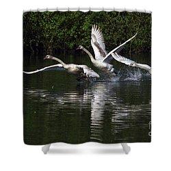 Swan Take-off Shower Curtain