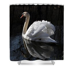 Swan With Reflection  Shower Curtain by Eleanor Abramson