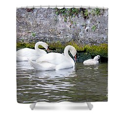 Swans And Cygnets In Brugge Canal Belgium Shower Curtain