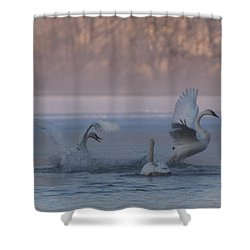 Shower Curtain featuring the photograph Swans Chasing by Patti Deters