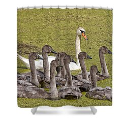Swans Family Shower Curtain